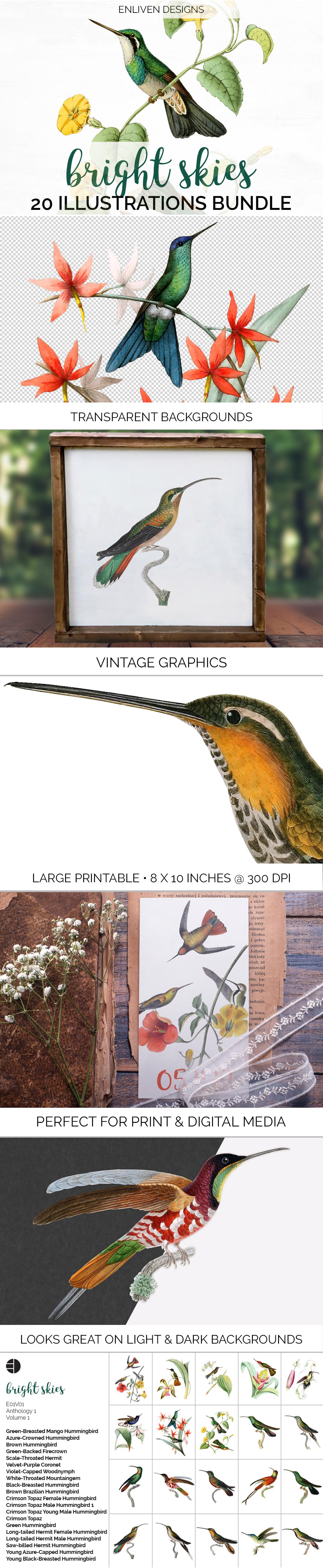 Hummingbird Bundle - Volume One - 20 Count - Humming Birds example image 5