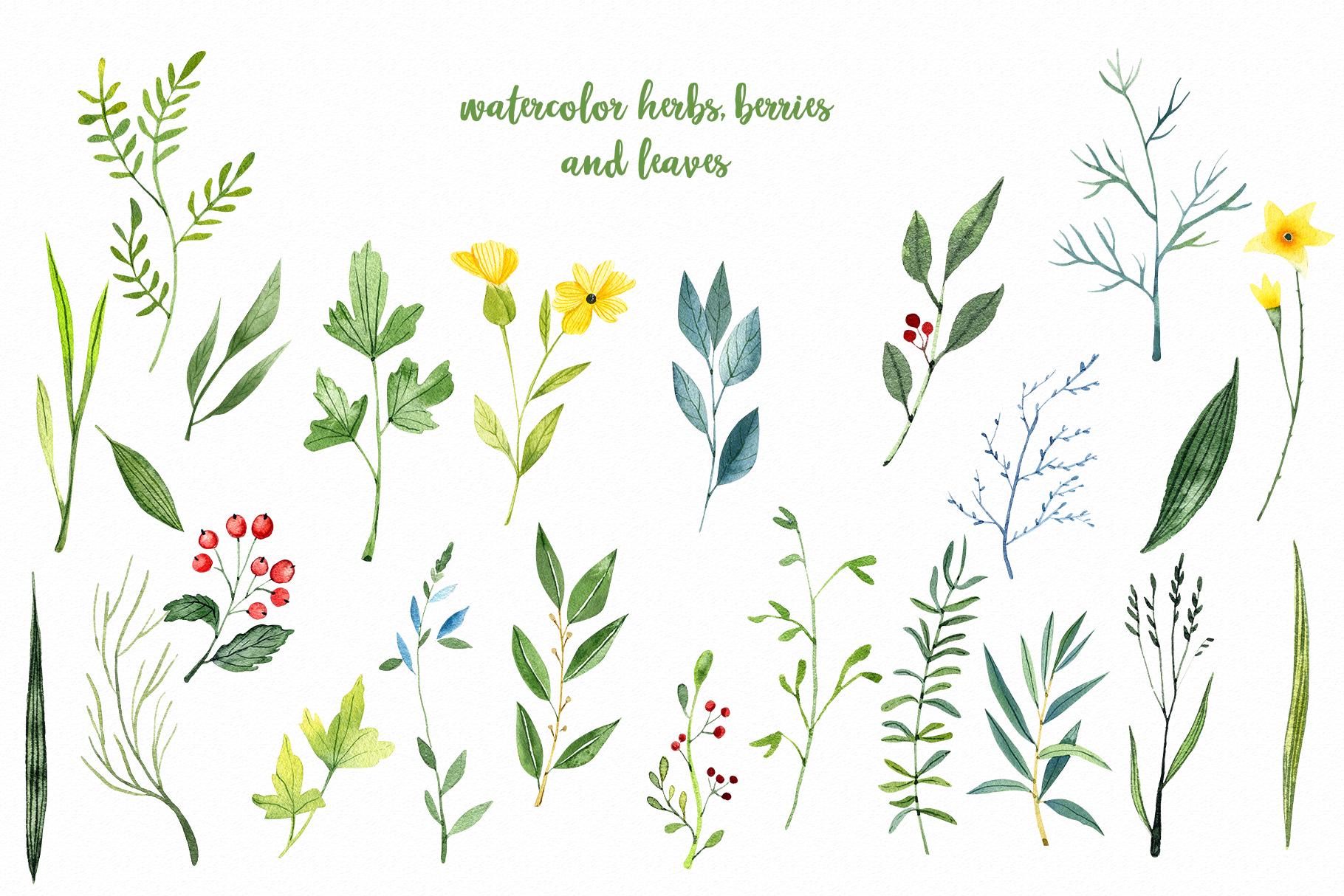 WATERCOLOR herbs, leaves, poppy, wild flowers example image 2