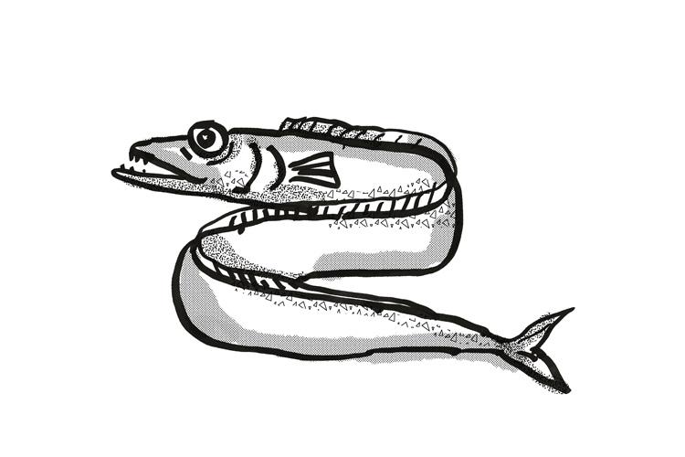 Frostfish New Zealand Fish Cartoon Retro Drawing example image 1
