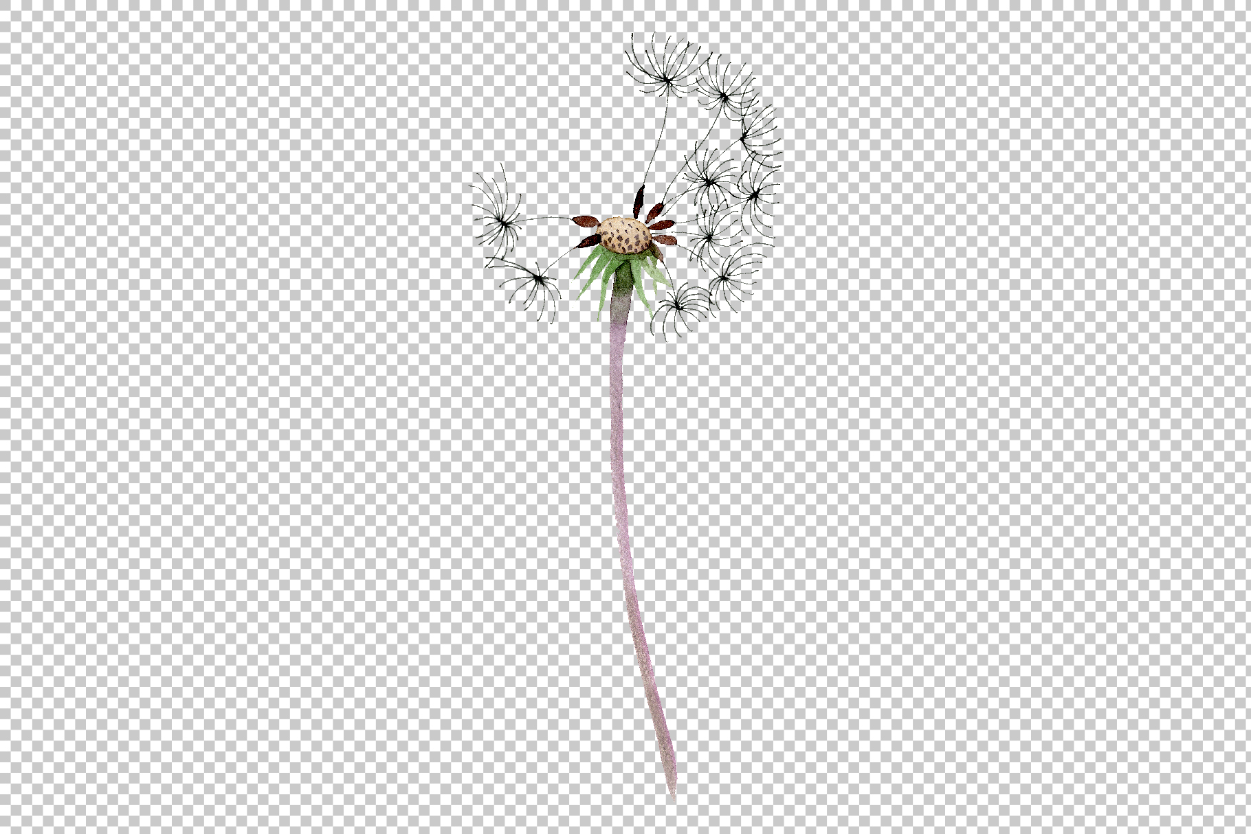 Bouquet rainbow dandelion watercolor png example image 5