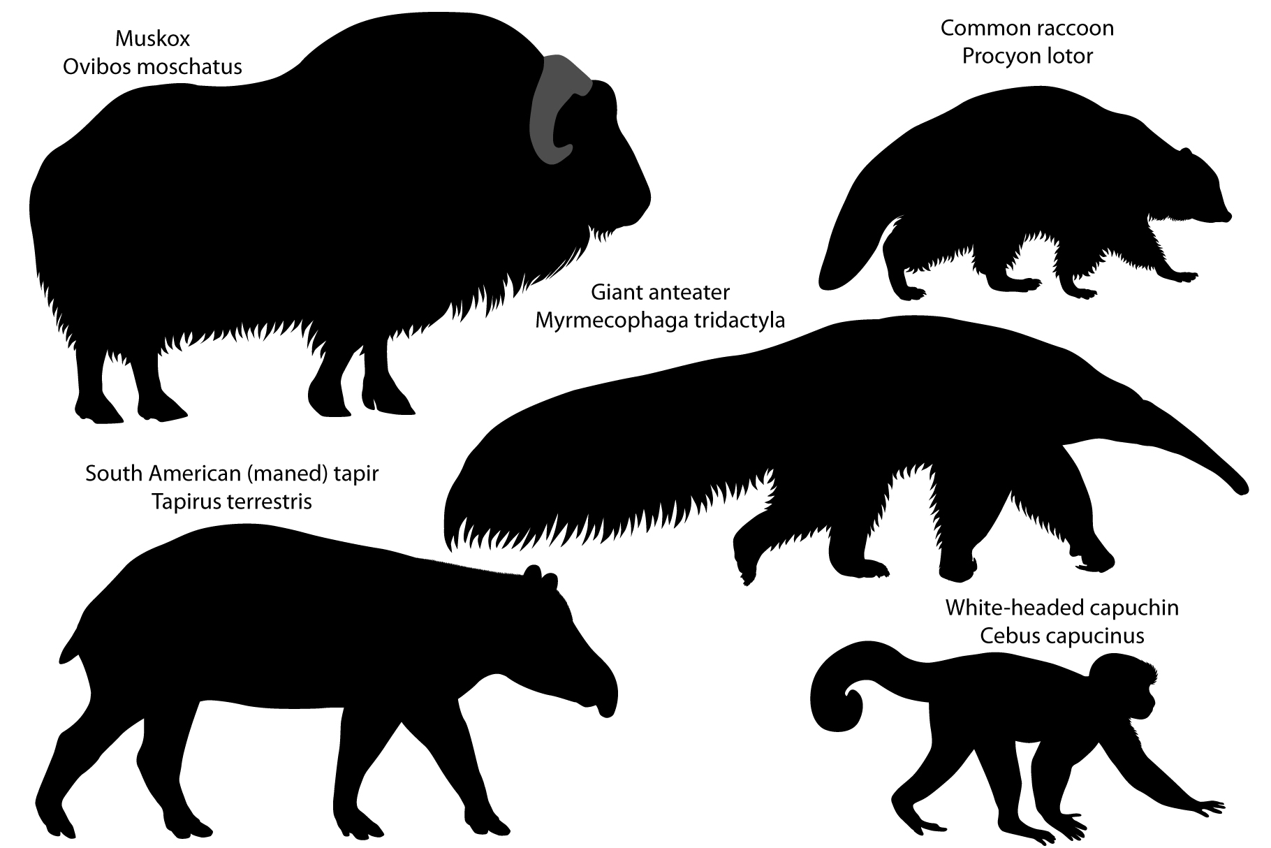 Silhouettes of animals of America example image 1