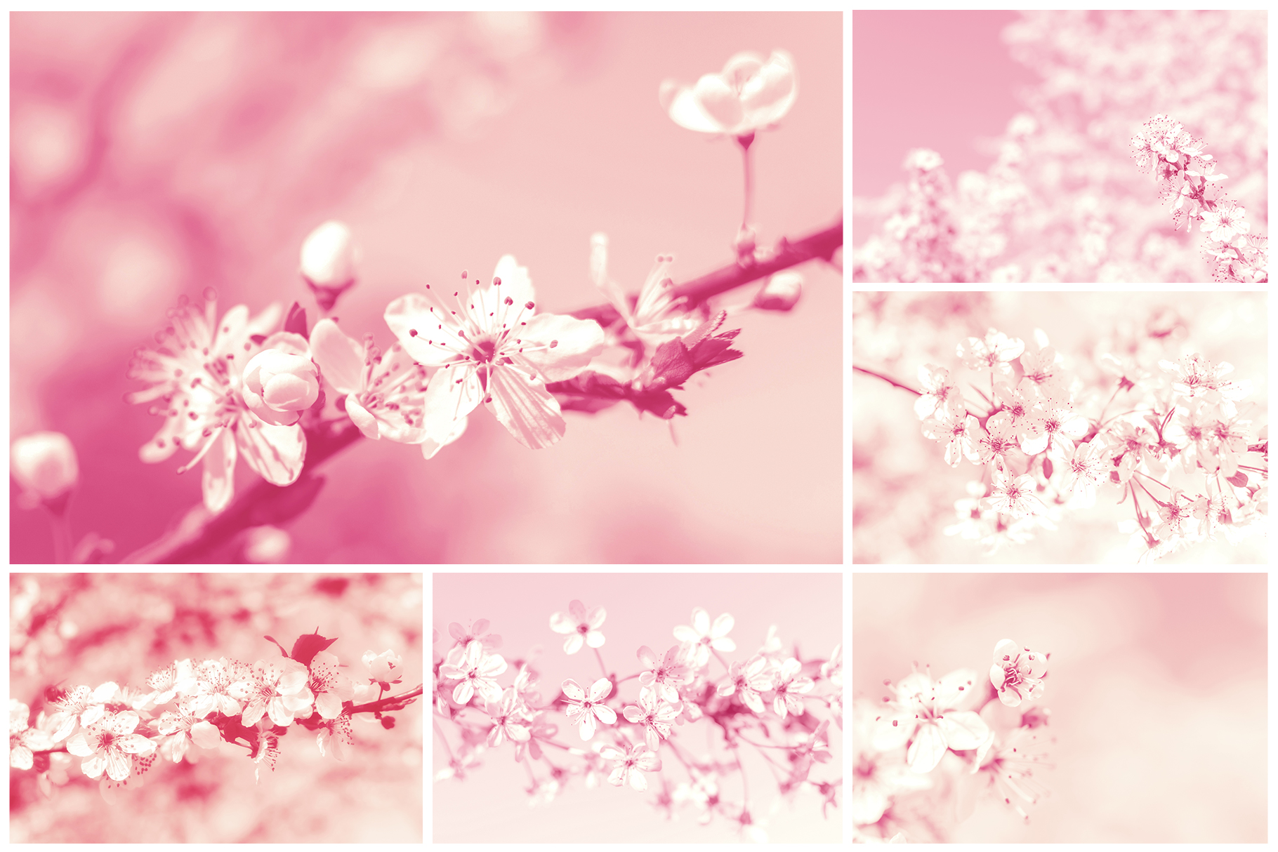 Spring Flowers and Paintings Bundle example image 20