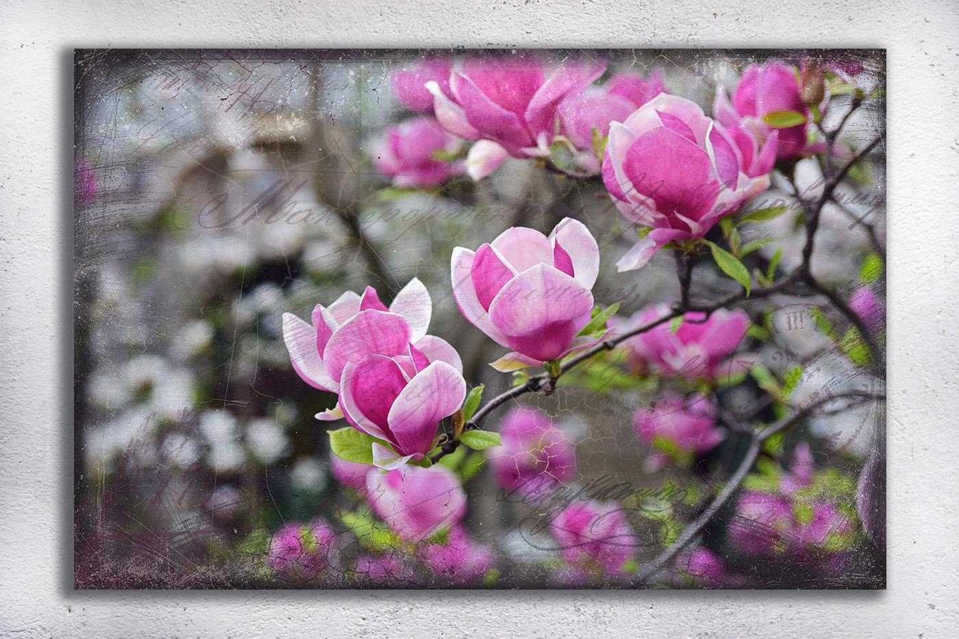 Nature photo, floral photo, spring photo, magnolia photo example image 2
