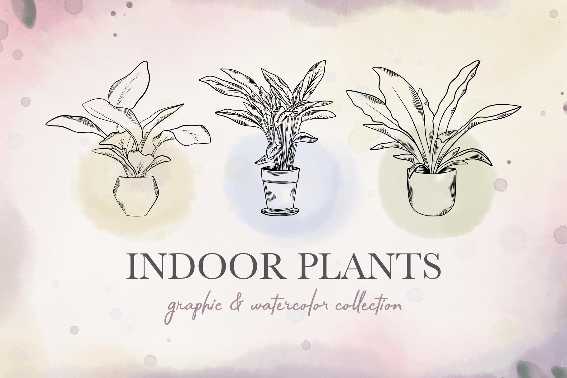Indoor Plants example image 1