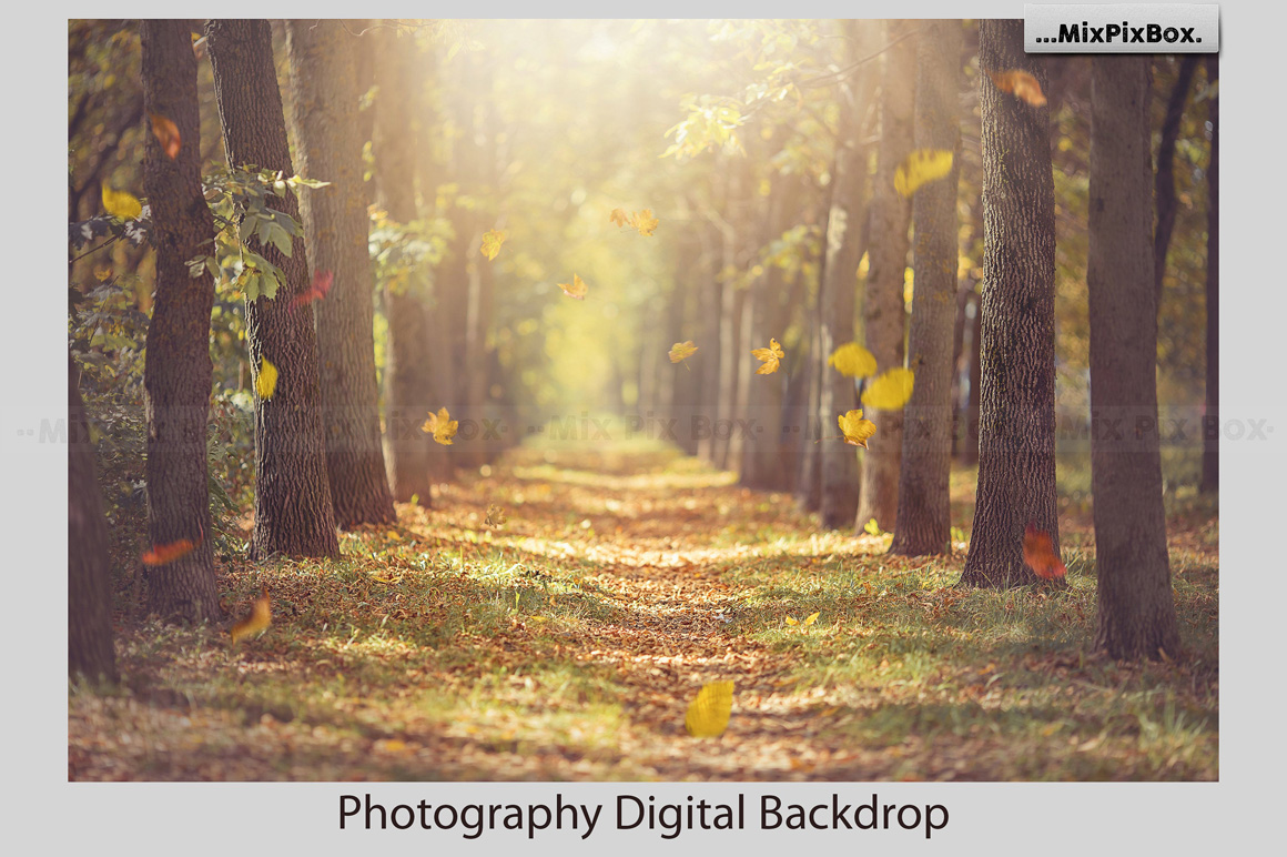 Autumn Alley Backdrop example image 2