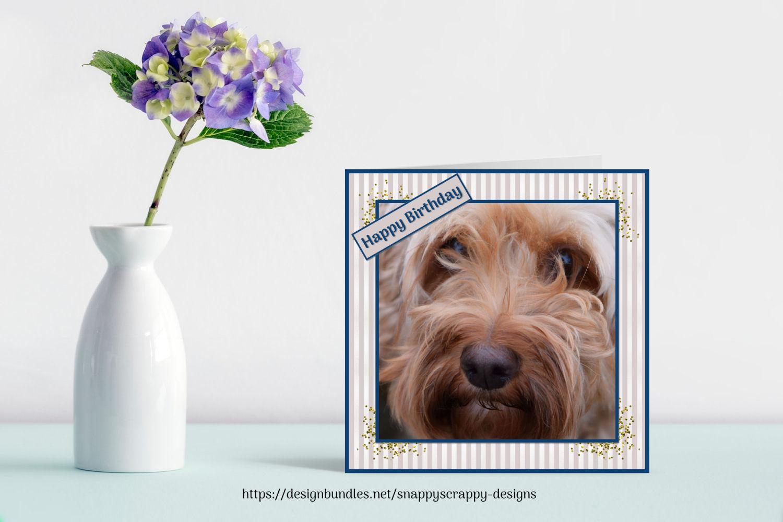 Animal Portrait Photographs example image 10