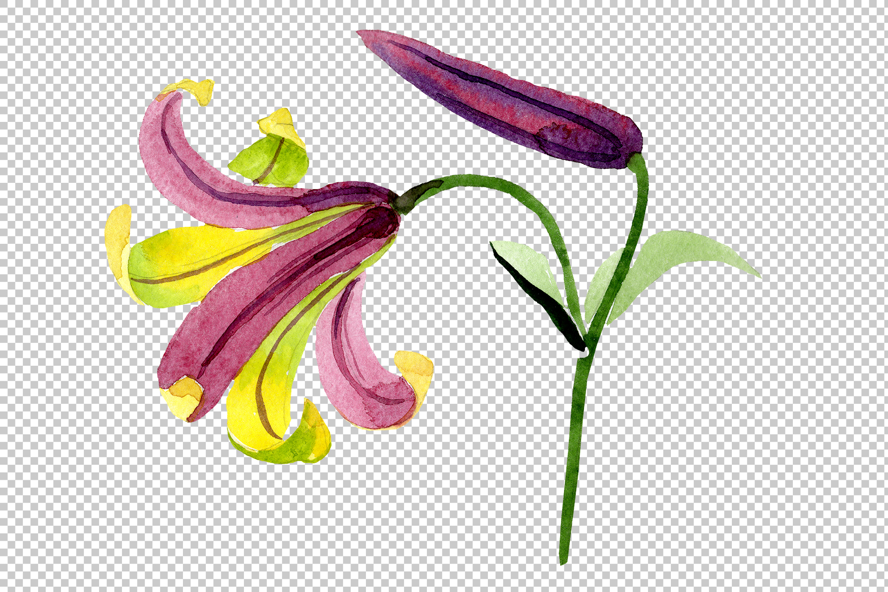 Wildflower lemon lily PNG watercolor set example image 5