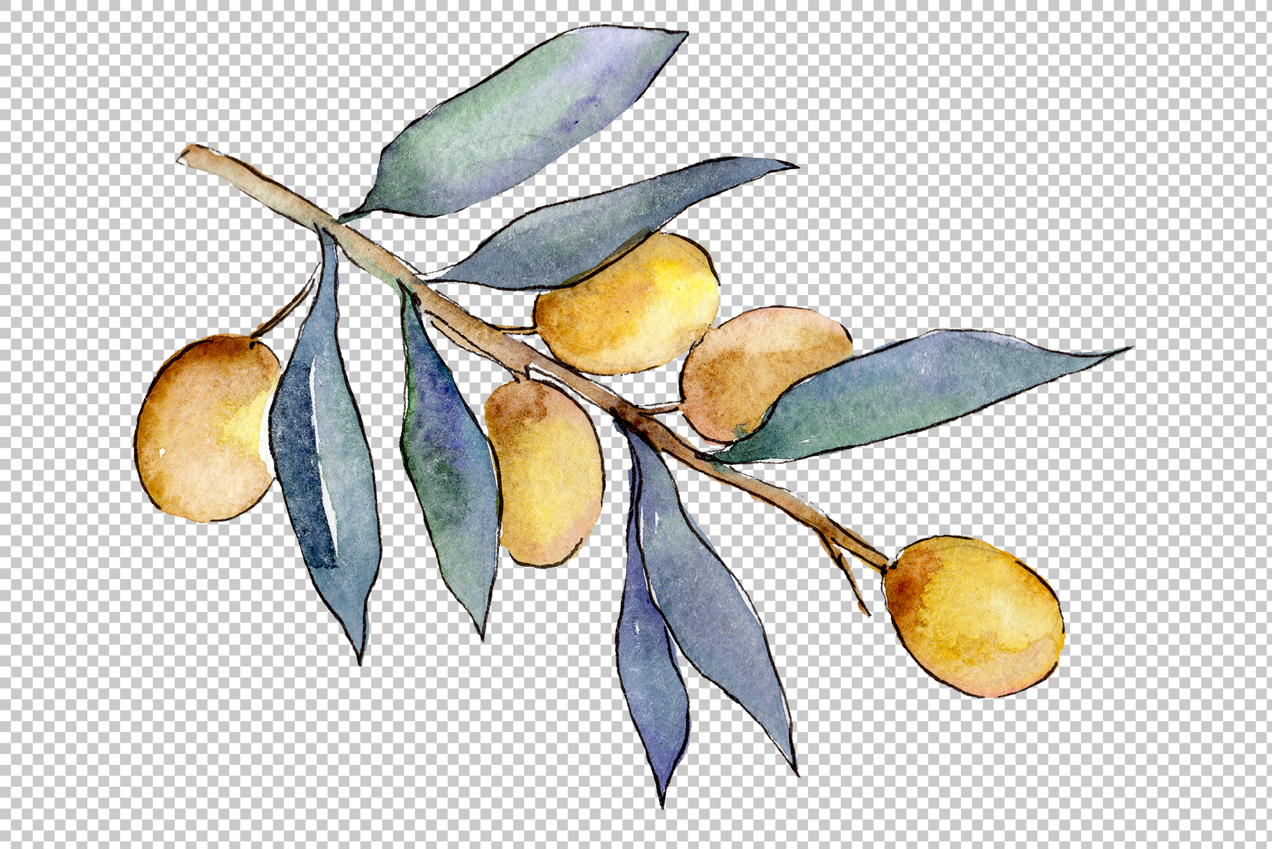 Watercolor olives PNG set example image 5