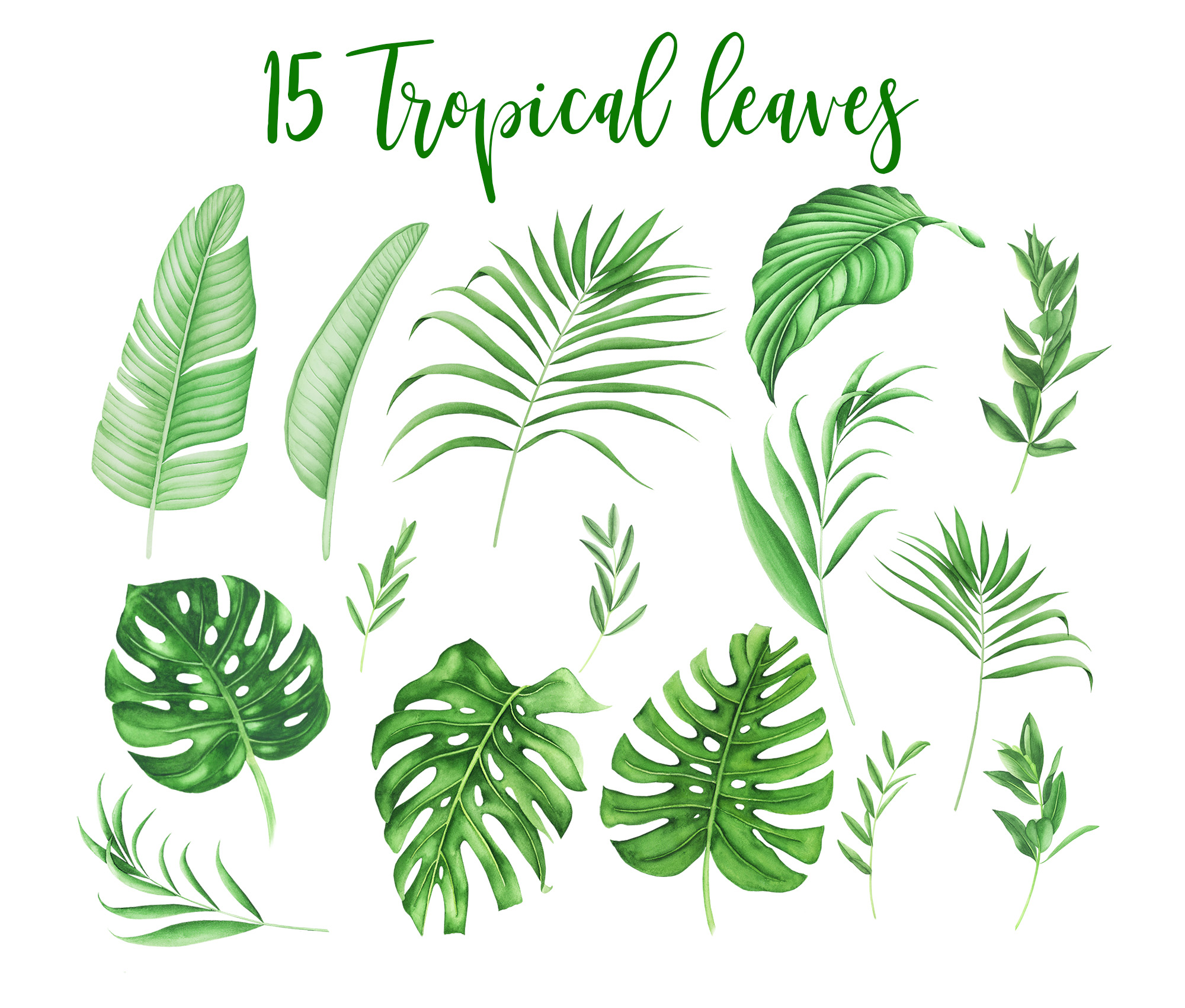 Tropical leaves and flowers clipart example image 2