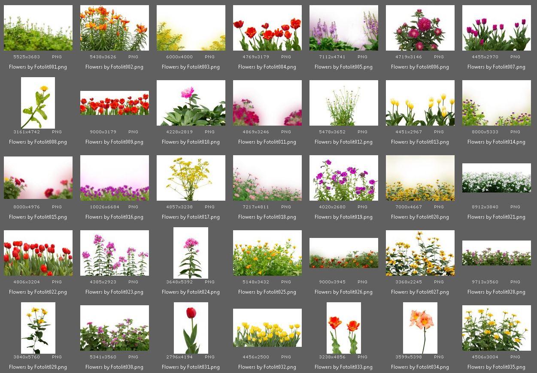 65 Flower Photo Overlays example image 4