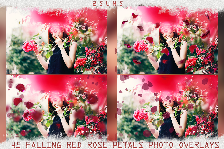 Falling Rose Petals Photo Overlays , Rose Petals, Red Rose example image 5
