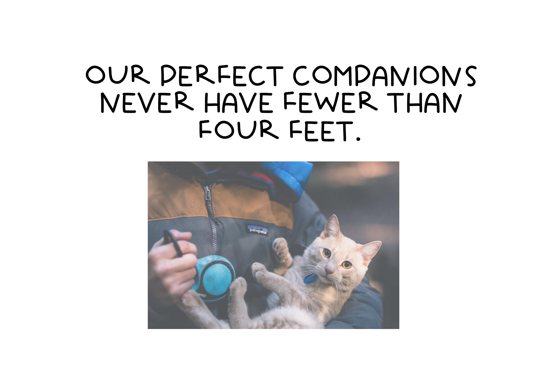 Little Kitty - A Fun Handwritten Font example image 6
