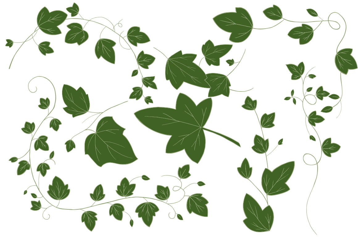 Ivy Vector Illustrations example image 3