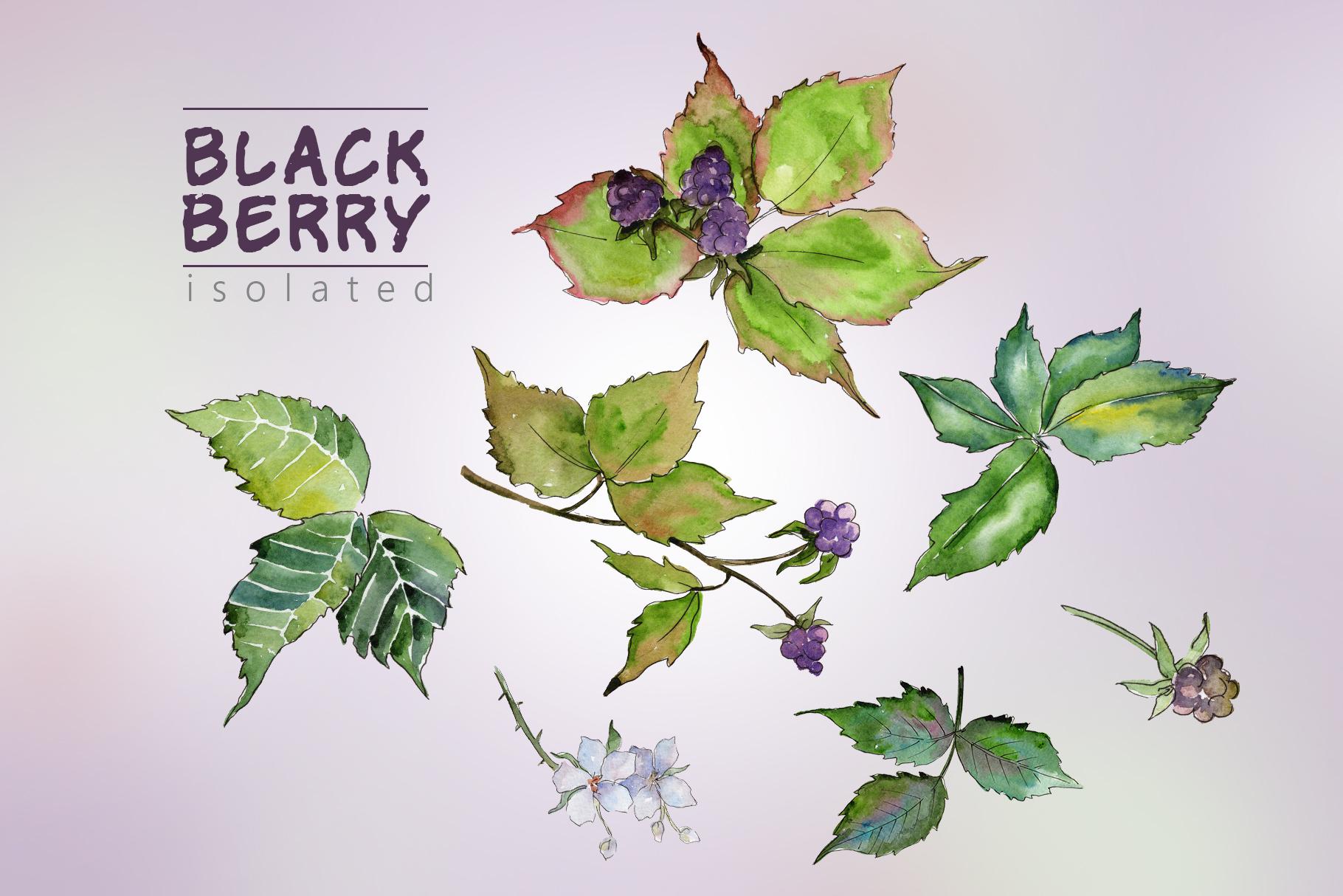 Sweetly blackberry JPG watercolor set  example image 3
