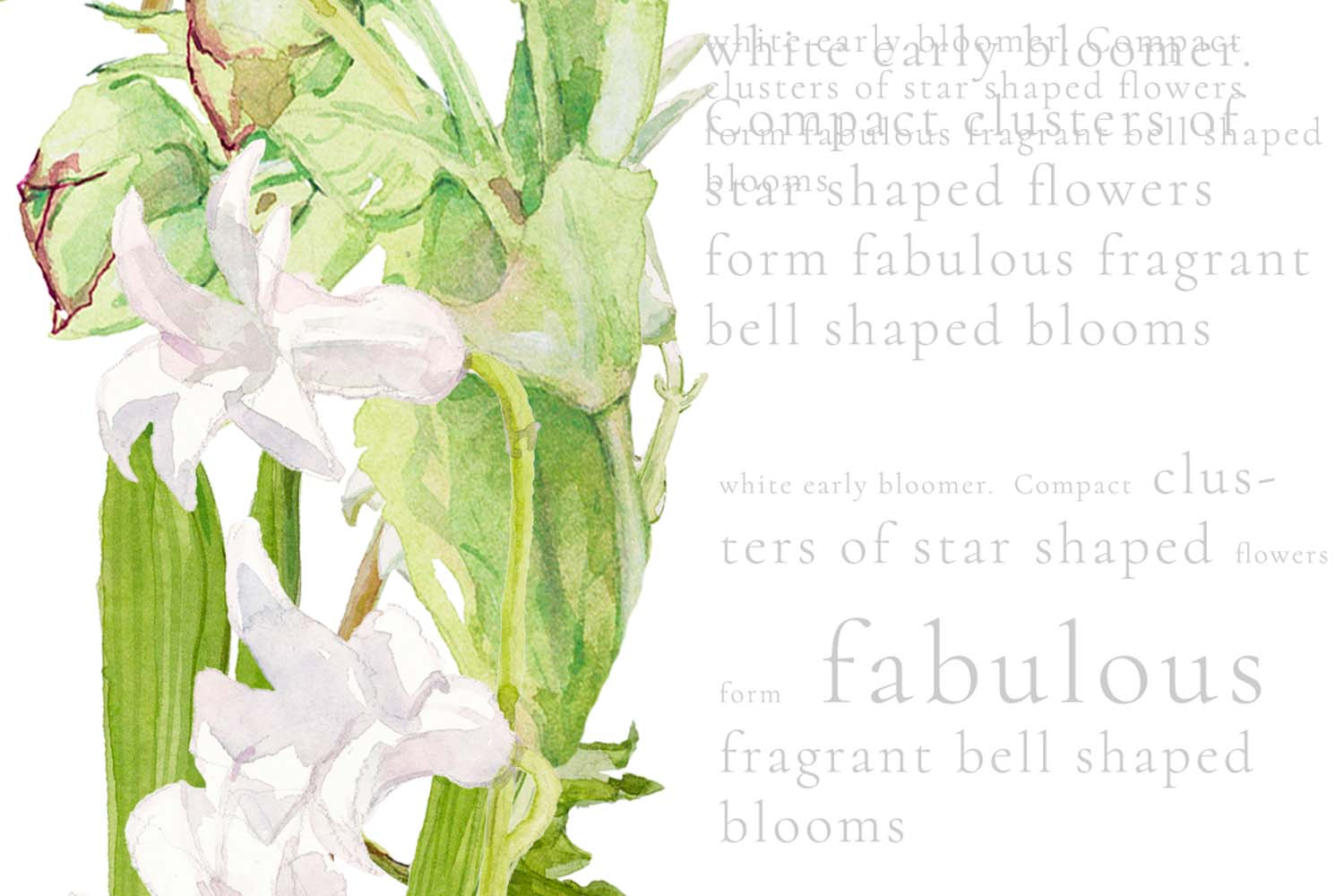 White Watercolor Bouquets & Wreaths example image 4