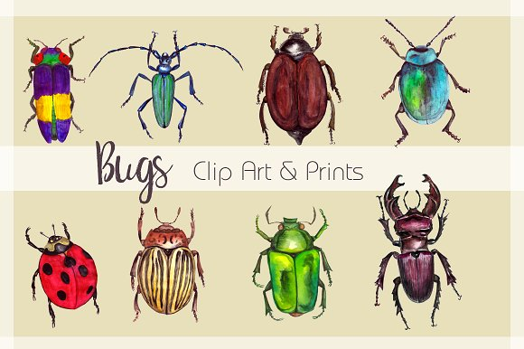 Watercolor Beetles Clipart & Print example image 2
