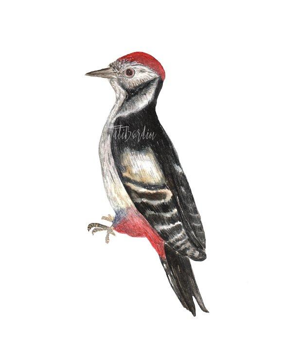 Watercolor Birds Clip Art example image 5