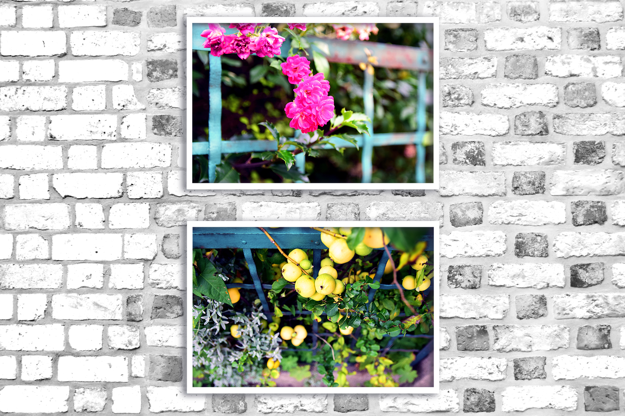 Nature photo, floral photo, flower photo, summer example image 2