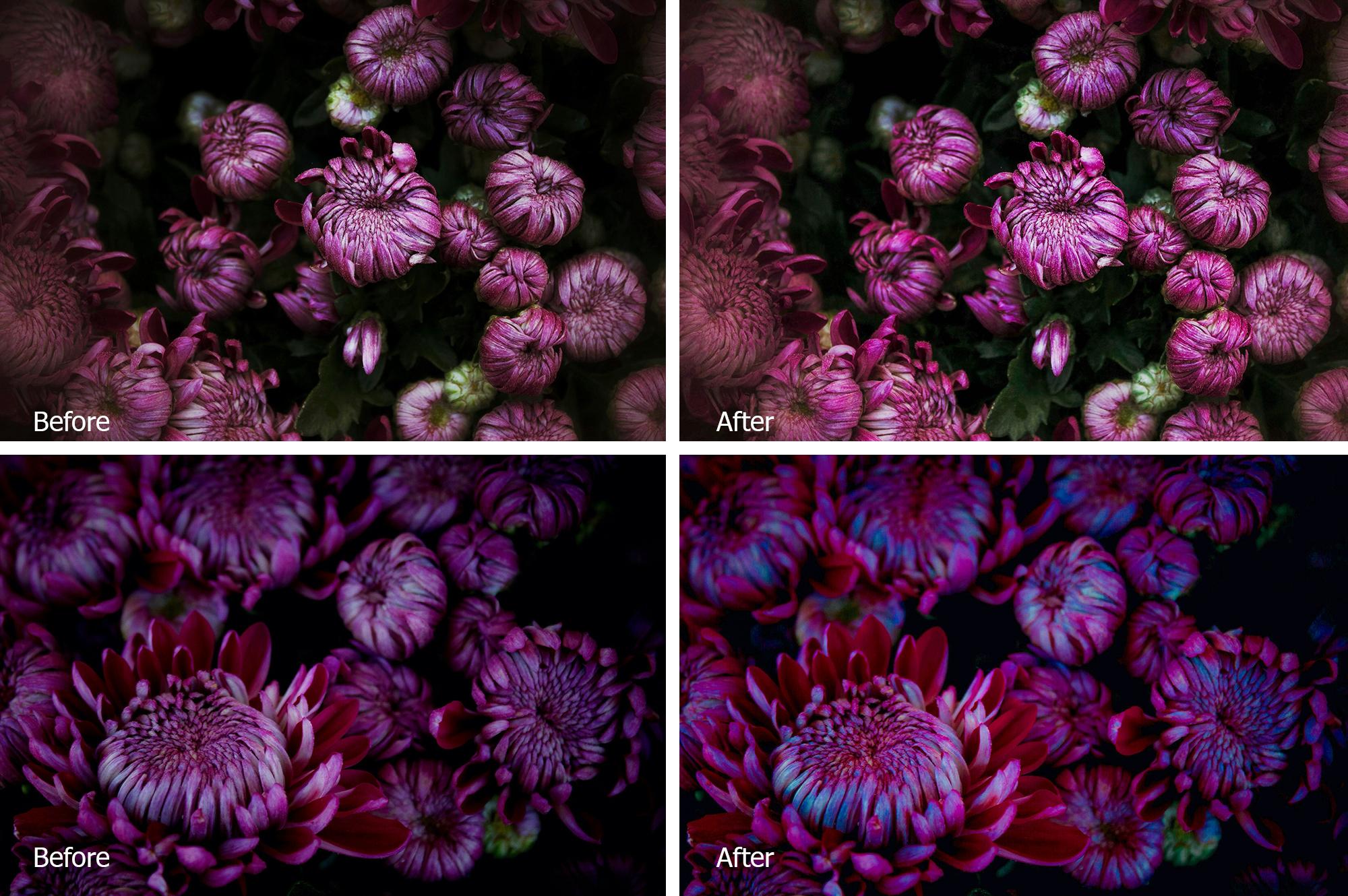 Chrysanthemum Lr Presets example image 3