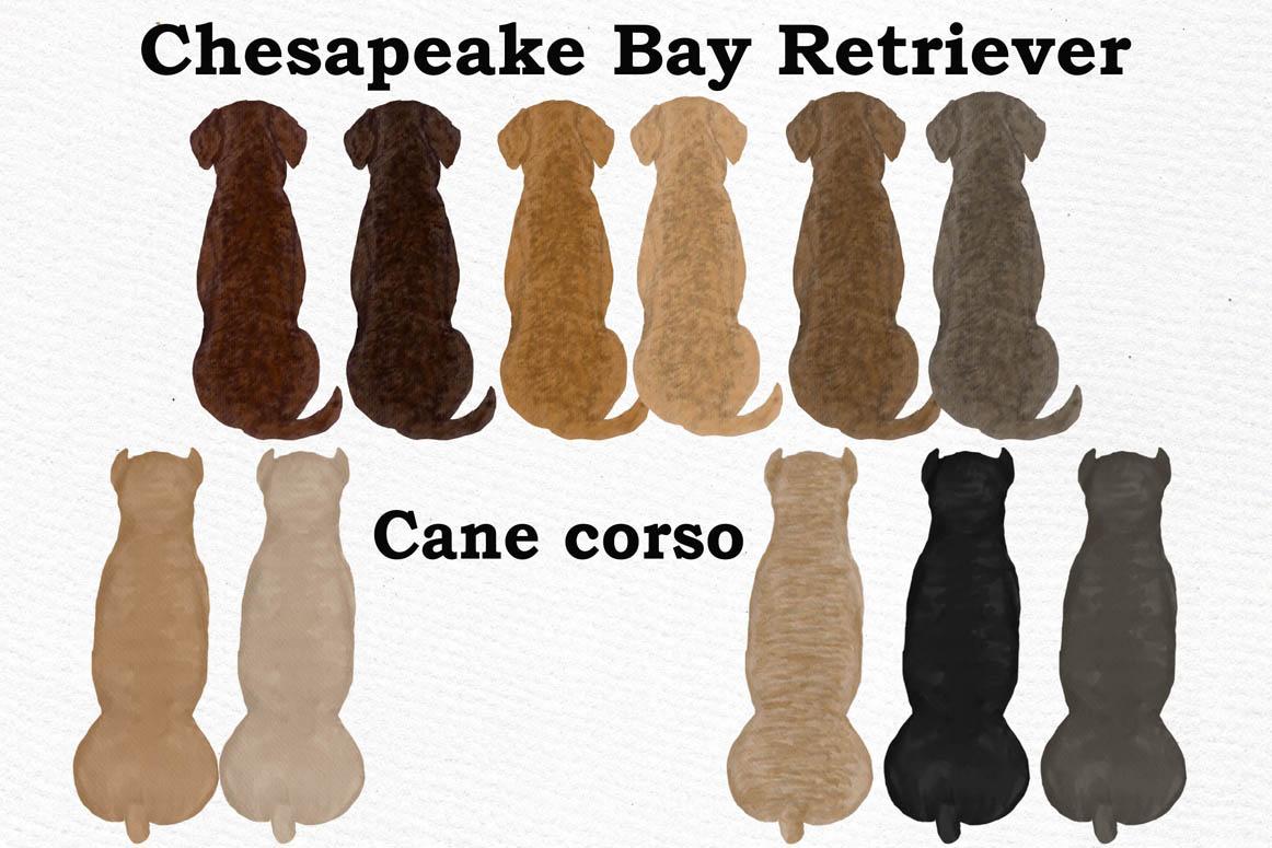 Dog clip art, Watercolor dogs, Maltese Bichon Cane Corso example image 6