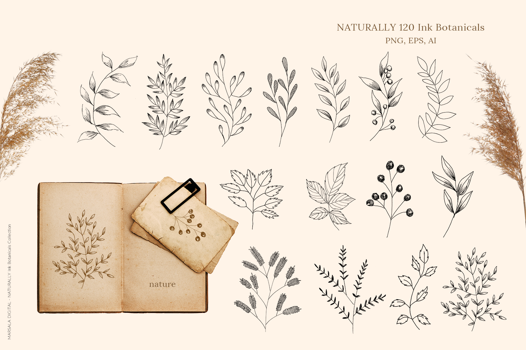 Ink Botanicals Vintage Wildflowers Ink Botanicals Vintage example image 6