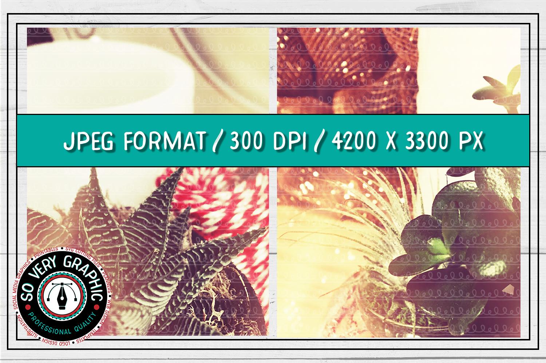 20 Vintage Succulents Holiday Styled Stock   Mock Up Bundle example image 4