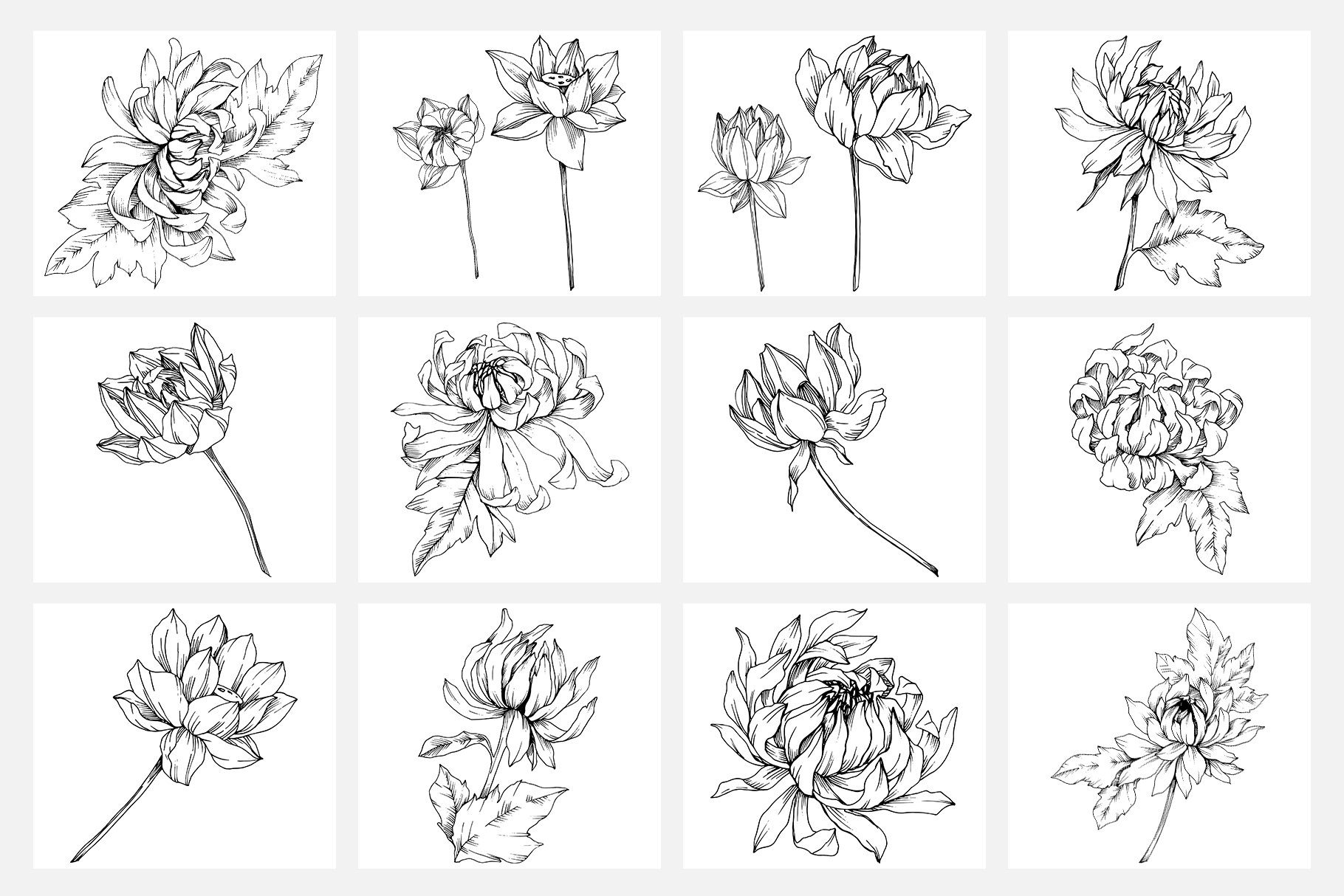 Vector illustration of Freesia flower watercolor png example image 6