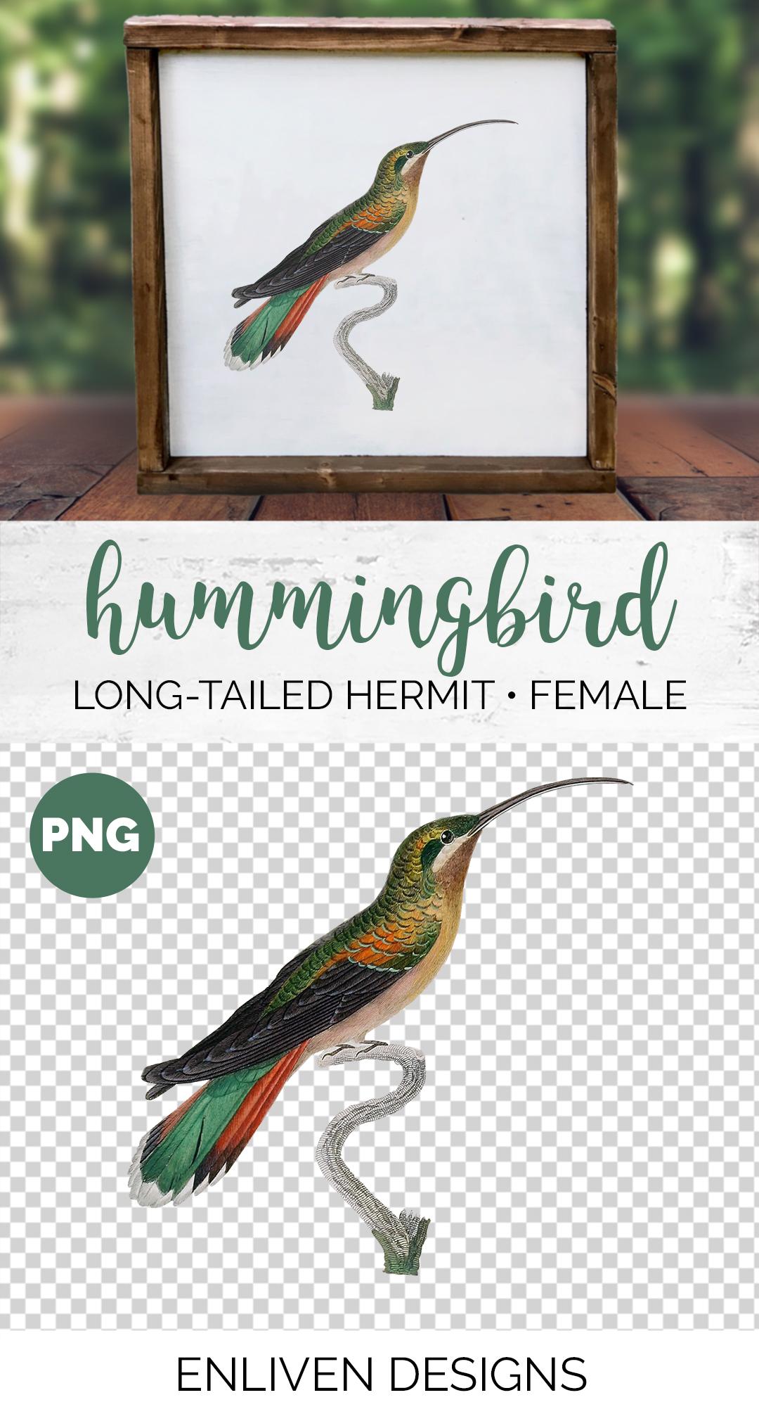 Hummingbird Bundle - Volume One - 20 Count example image 4