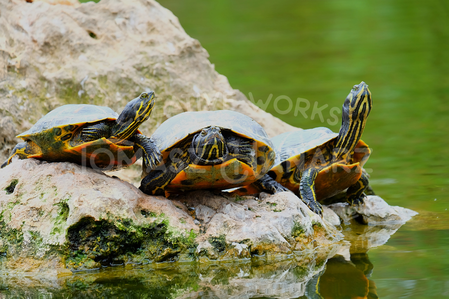 Turtle Photo Pack example image 4