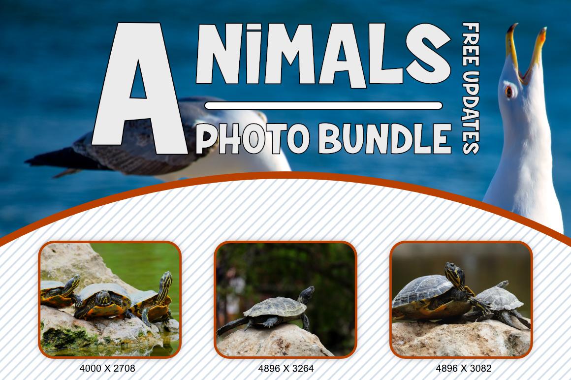Animals Photo Bundle example image 5