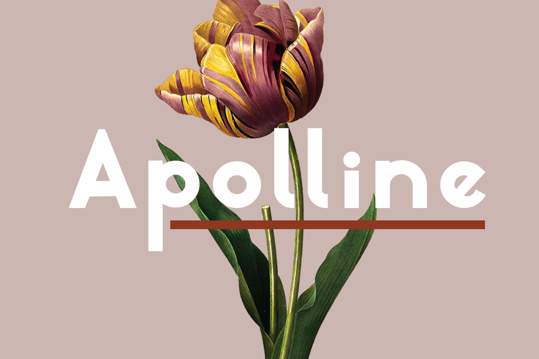 Apolline example image 1