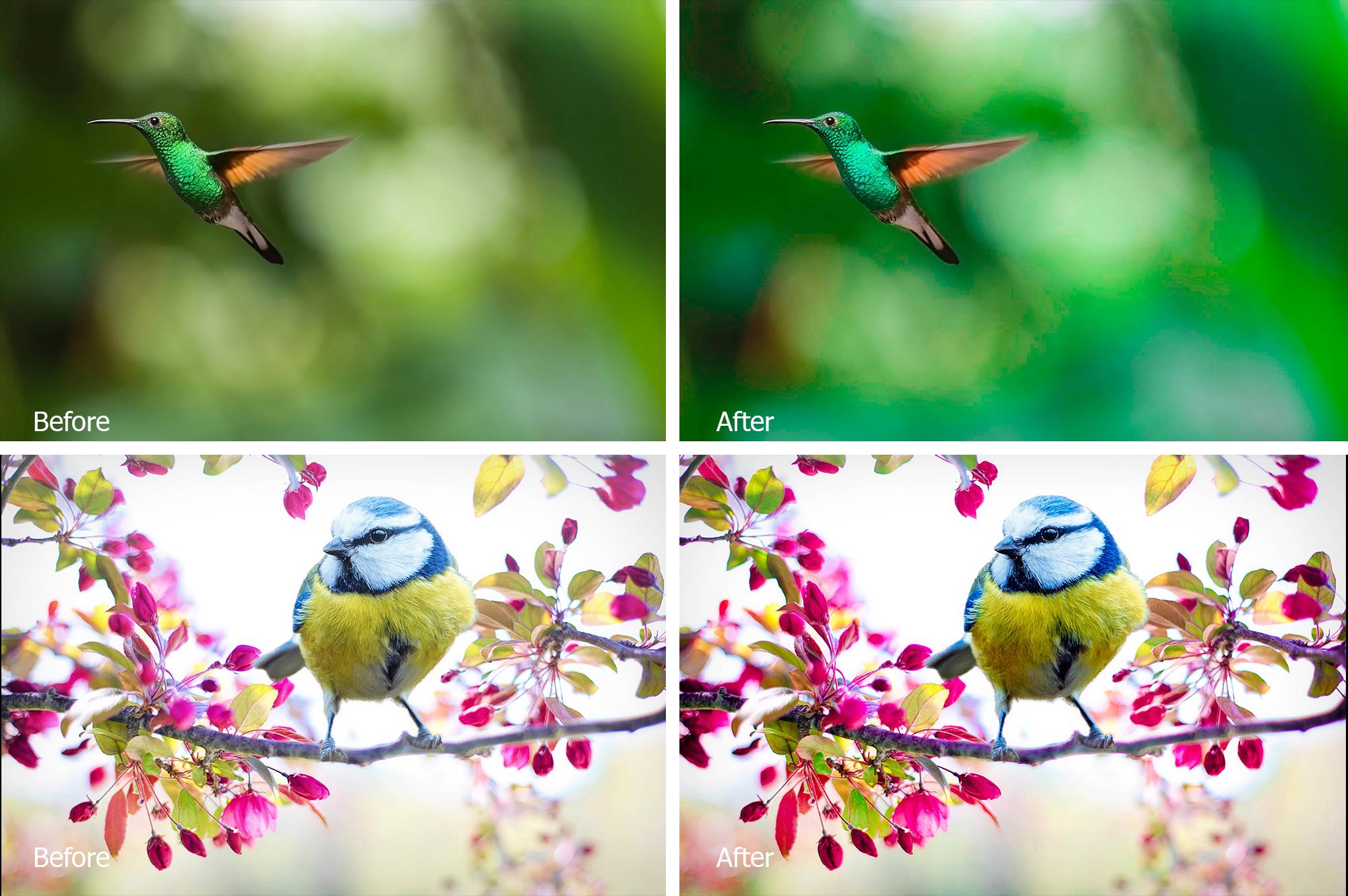 Birds Lr Presets example image 5