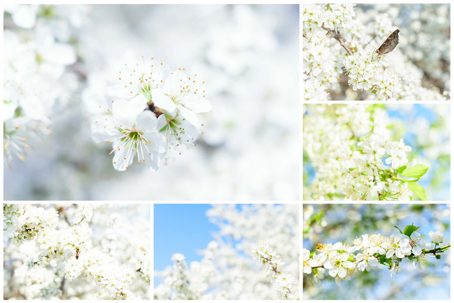 Spring Flowers and Paintings Bundle example image 23