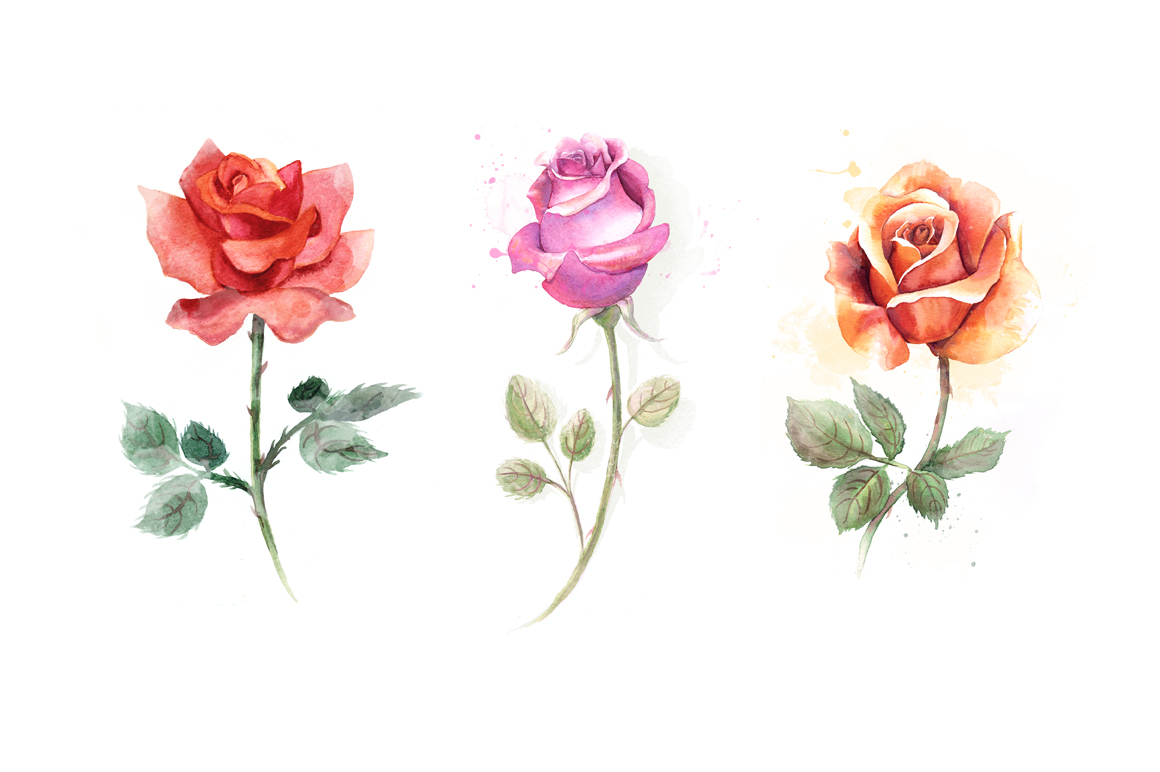 5 watercolor roses example image 3