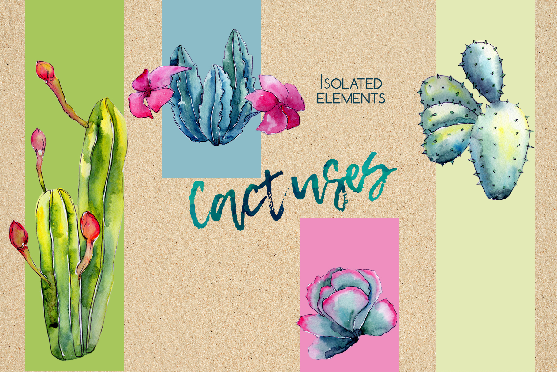 Wildflower cactus PNG watercolor set  example image 3