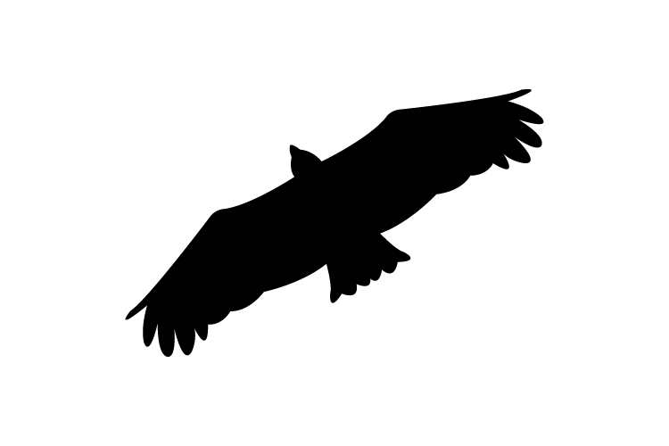 Eagle example image 1