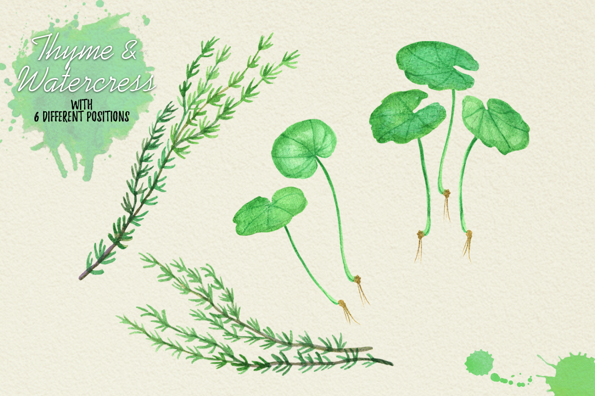 North American Herbs example image 20
