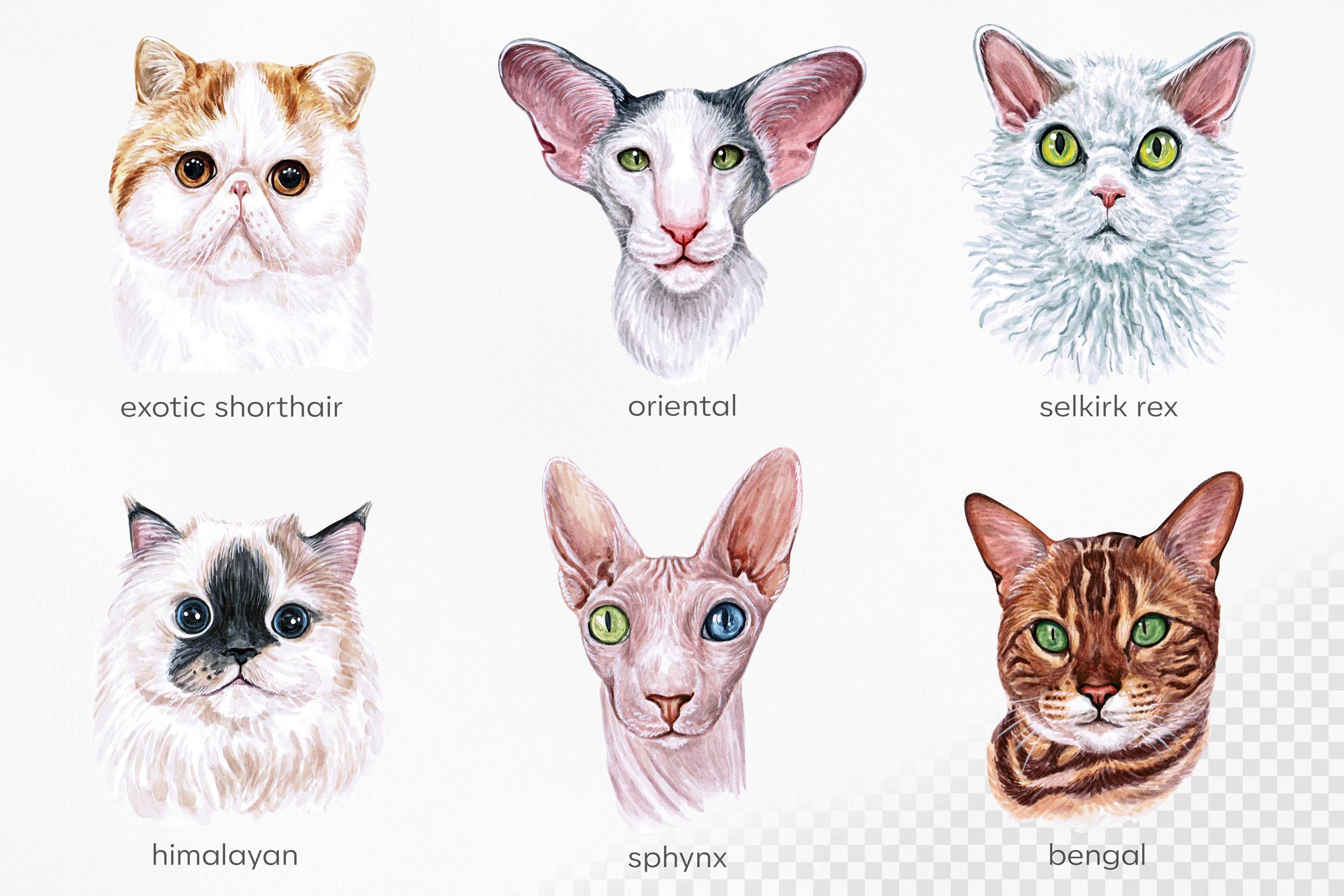 Watercolor 18 cat breeds illustrations. Cute cat. Meow. example image 4