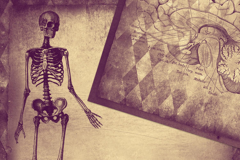Clandestine Anatomy Digital Paper example image 2