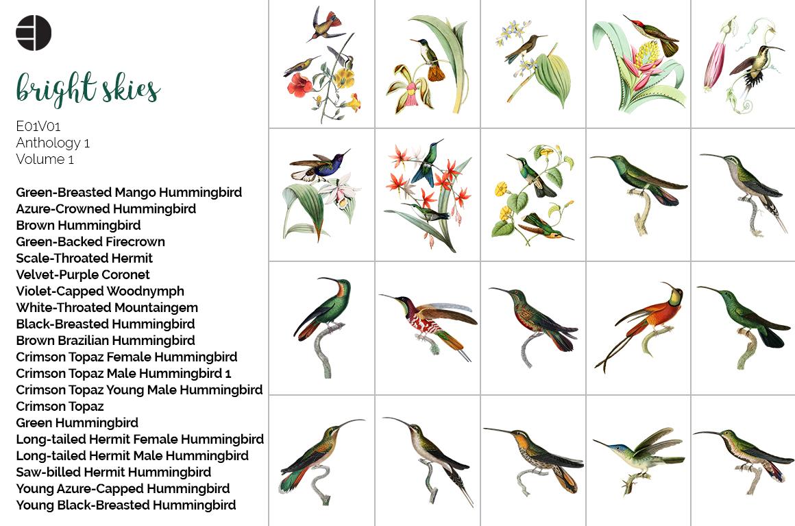 Hummingbird Bundle - Volume One - 20 Count example image 8