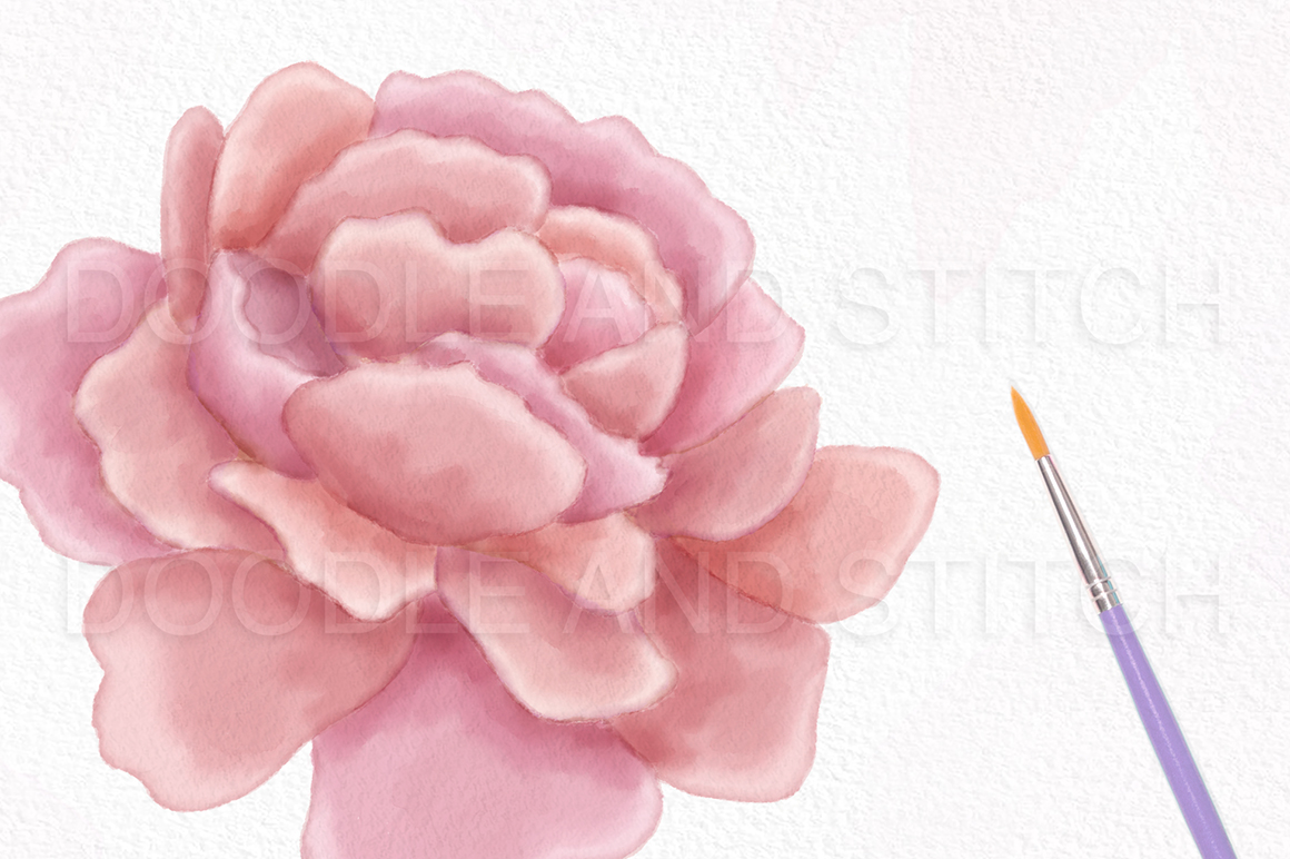 Peony Flower Watercolor Illustrations example image 5