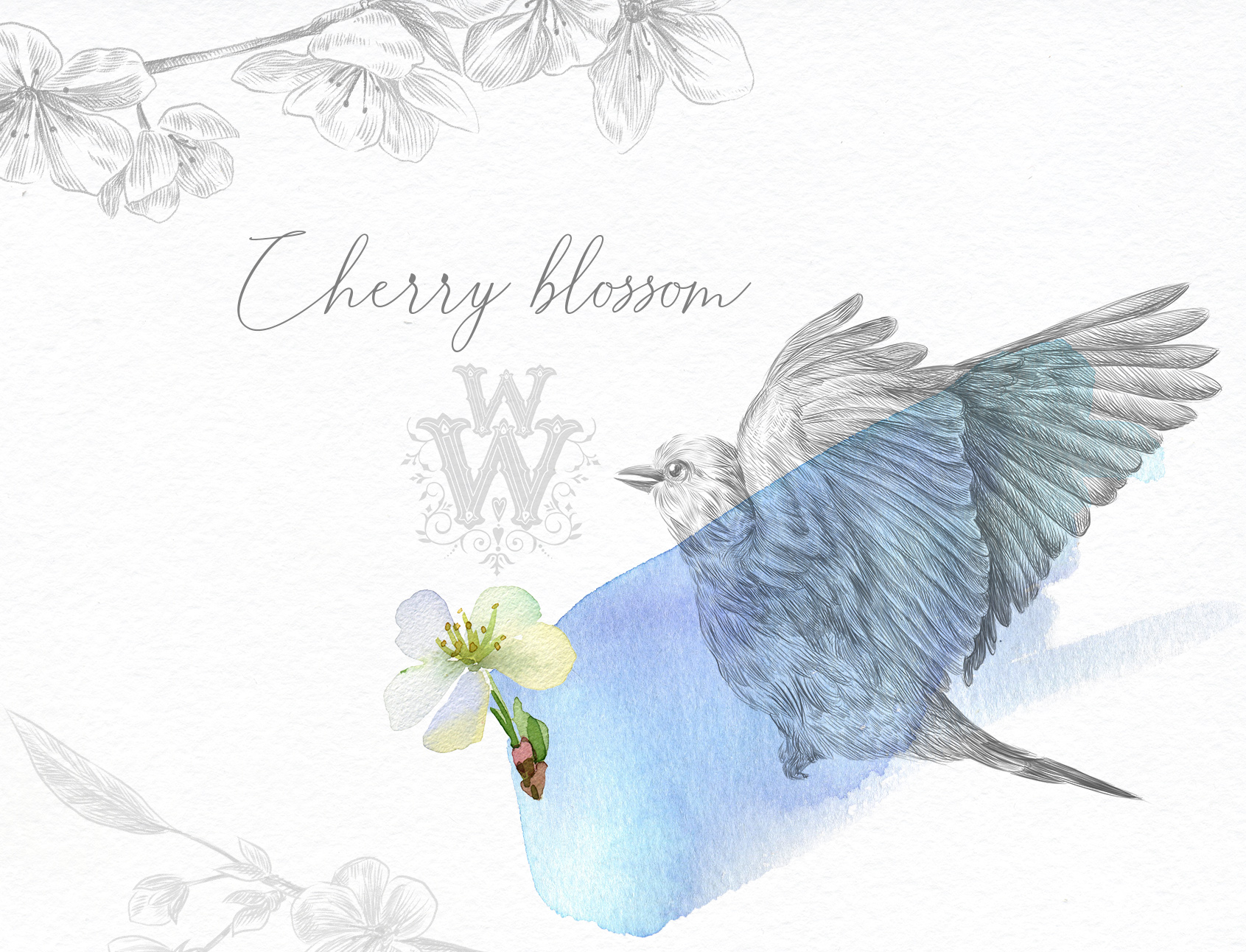 Watercolor white cherry blossom spring clipart example image 5