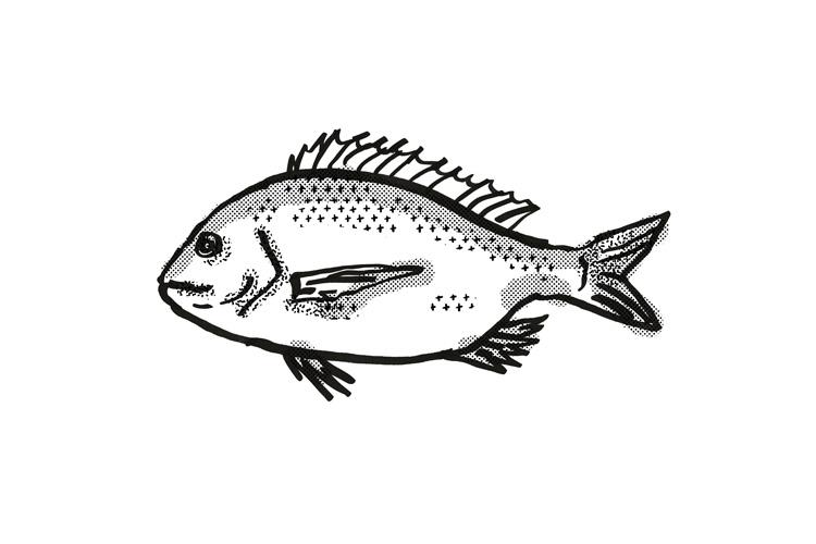 silver bream Australian Fish Cartoon Retro Drawing example image 1