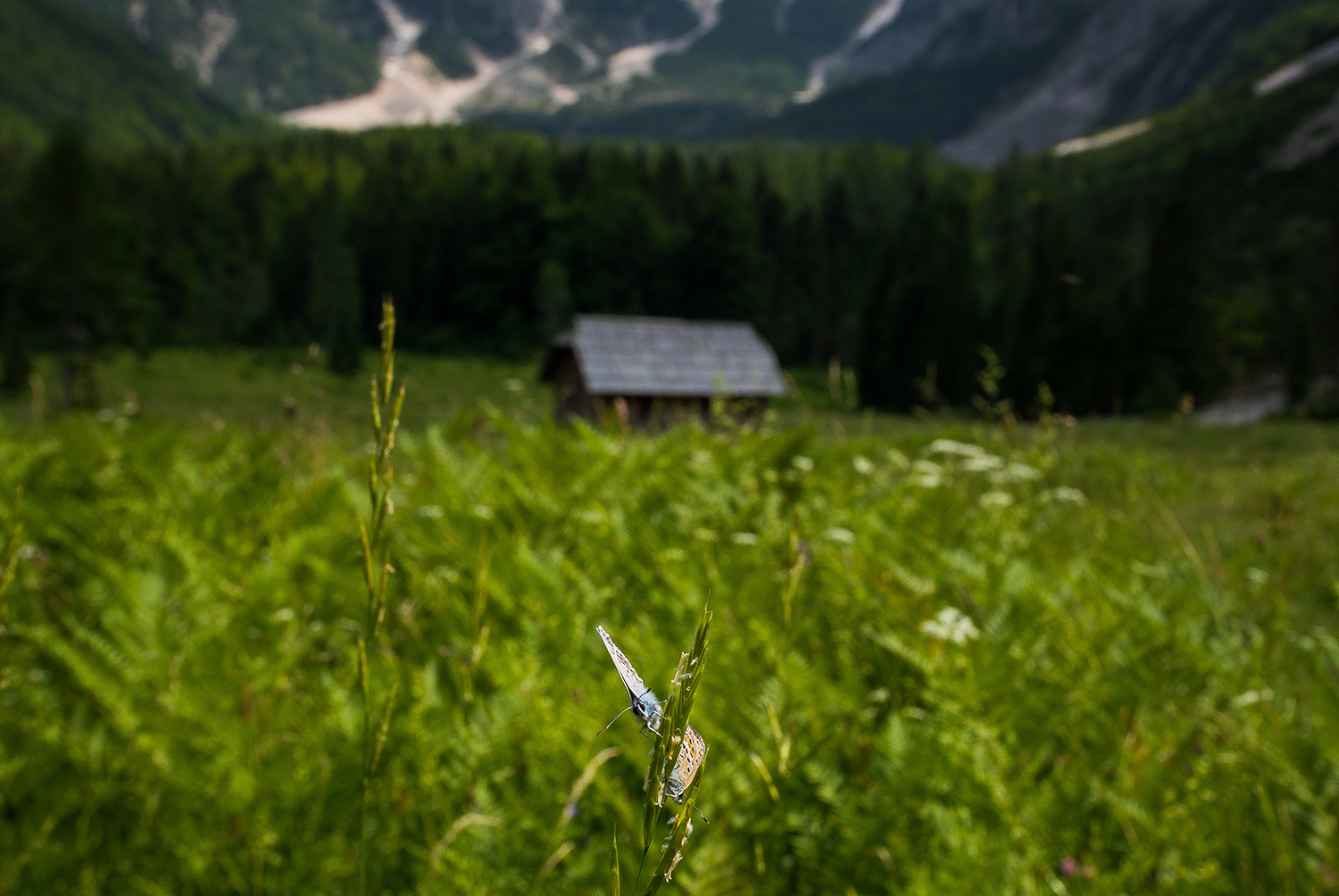 Cottage and butterfly in the Krnica valley example image 1