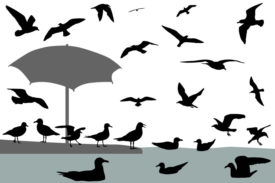 Gulls example image 1