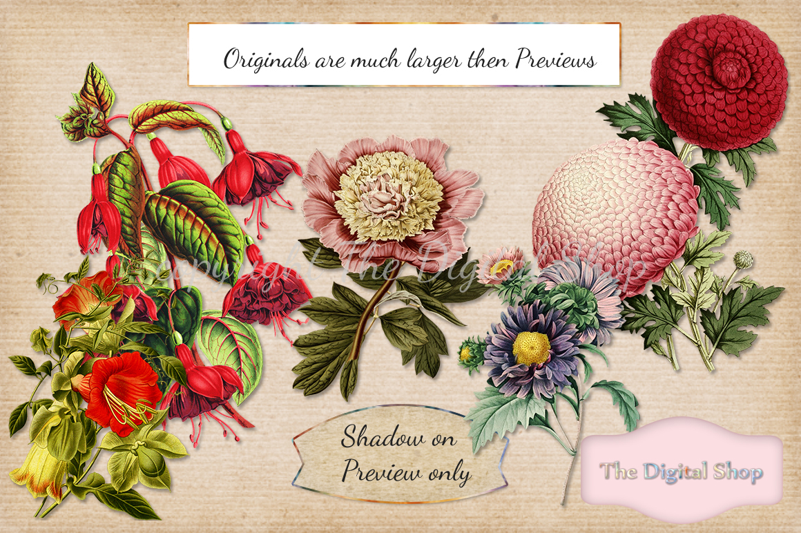 Vintage Flowers Collection example image 2