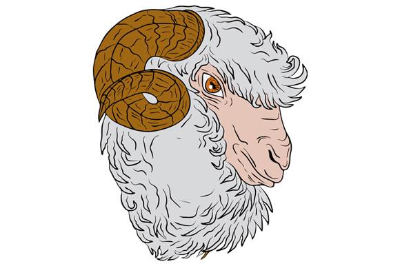 Merino Ram Sheep Head Drawing example image 1