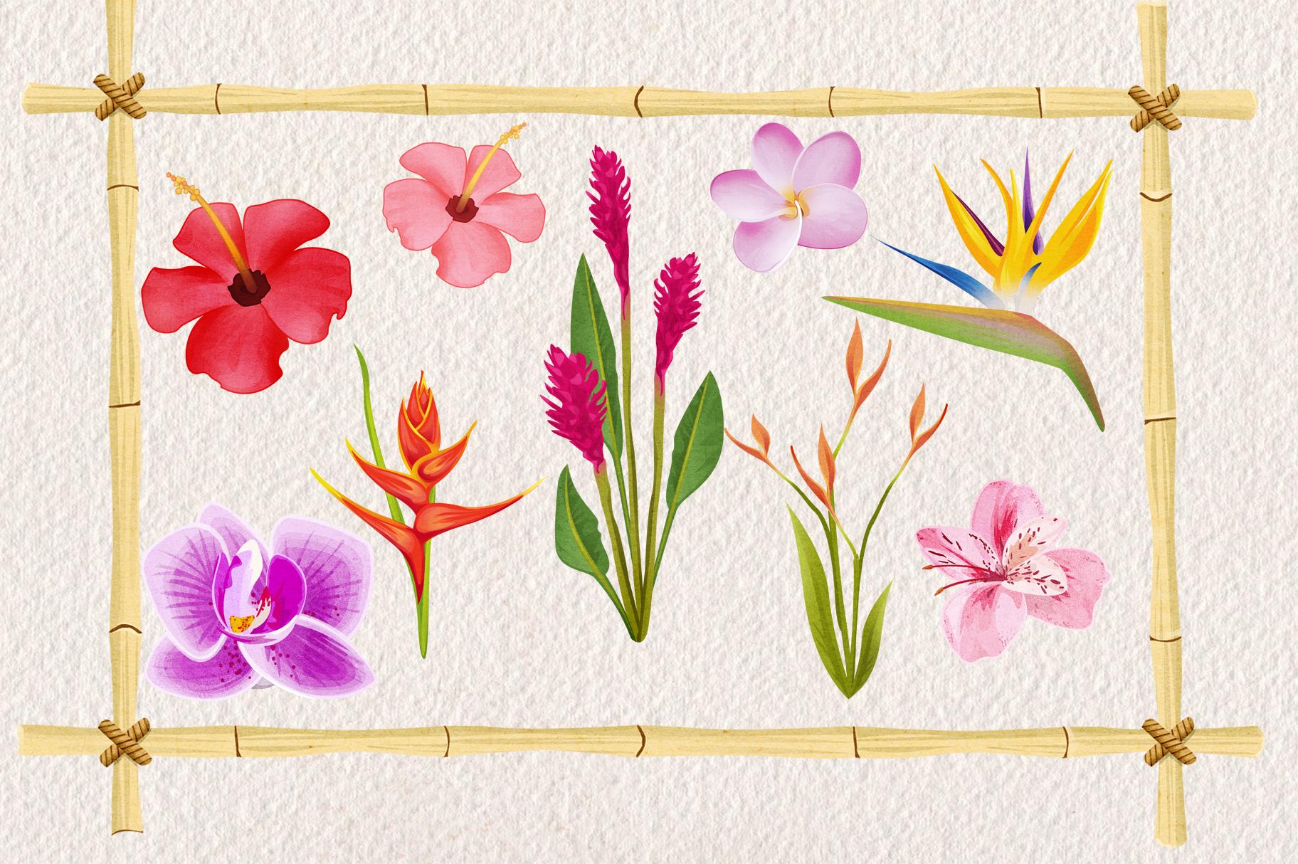 Tropical Floral Plants & Frames Set example image 3