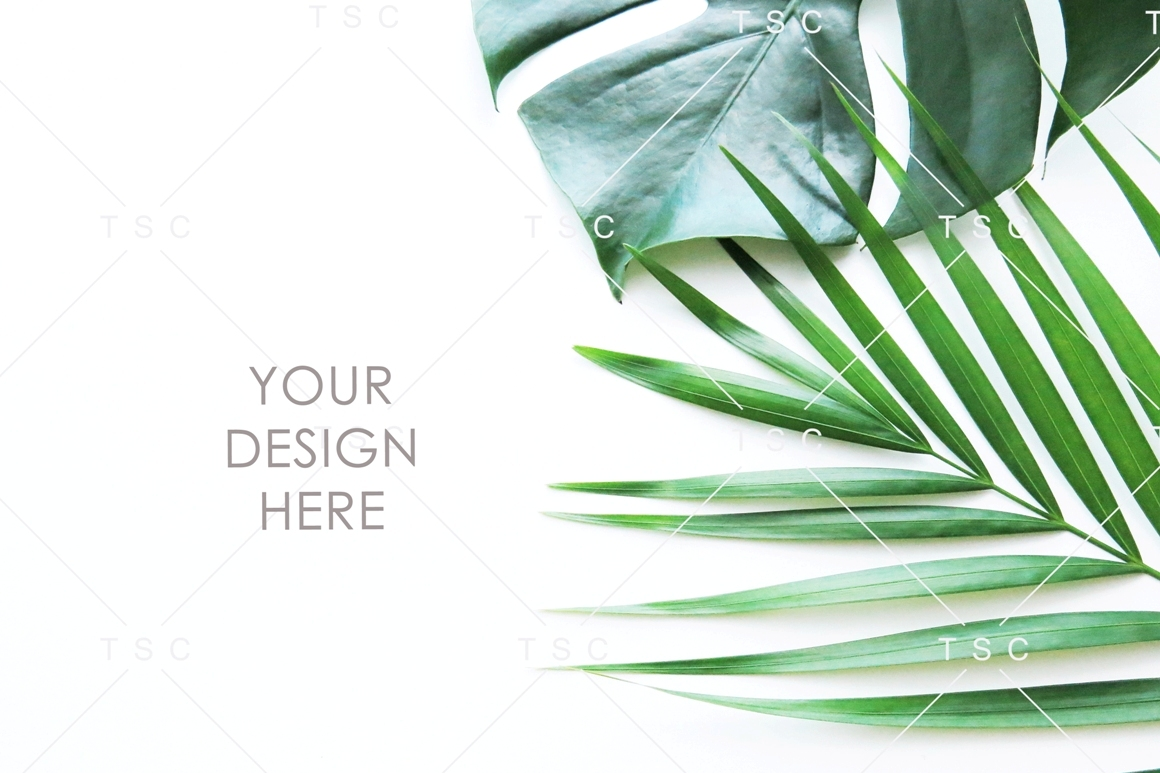 Green Leaves Stock Photo example image 1