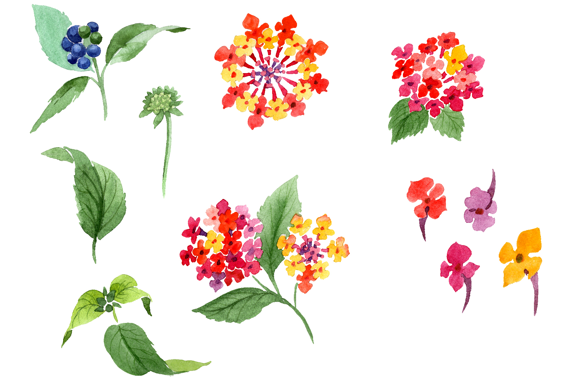 Red Lantana Watercolor png example image 1